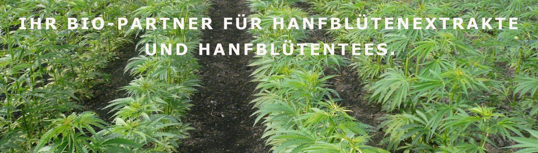 a field of medical marijuana